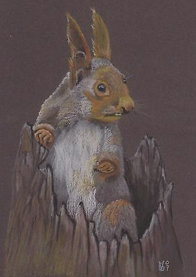 Vg155 Original Chalk Pastel Drawing Of A Red Squirrel