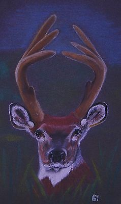 Vg040 Original Chalk Pastel Drawing Of A White Tailed Deer