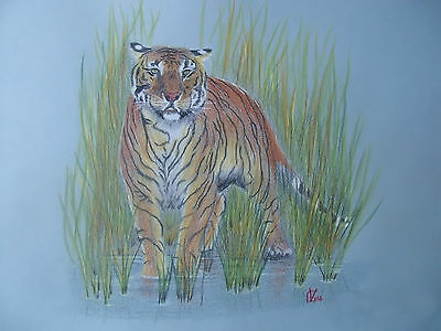 Vg737 (Animals, Realism, Original) Coloured Graphite Drawing Of A Bengal Tiger