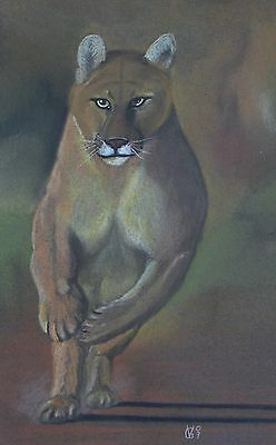 Vg127 Original Chalk Pastel Drawing Of A Mountain Lion