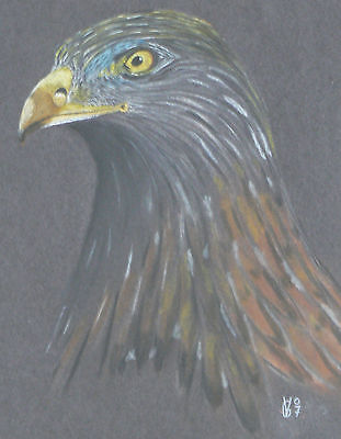 Vg049 Original Pastel Drawing Of A Red Kite Head