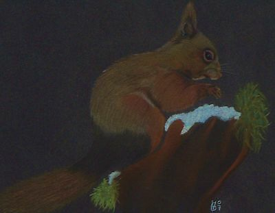 Vg059 Original Chalk Pastel Drawing Of A Red Squirrel