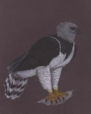 Vg478 Original Pastel Drawing Of A Harpy Eagle