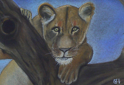 Vg094 Original Pastel Drawing Of A Lion Cub