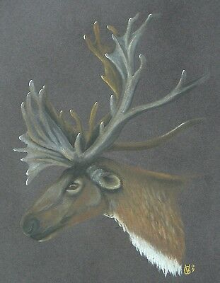 Vg469 Original Pastel Drawing Of A Woodland Caribou Head