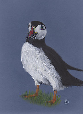 Vg624 Original Pastel Drawing Of A Puffin