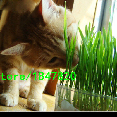 30g 1Bag Harvested Cat Grass approx 800 Seeds Organic Cat snack - Free Shipping!
