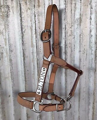 Horse Halter with Engraved Nameplate - 4 sizes - Leather