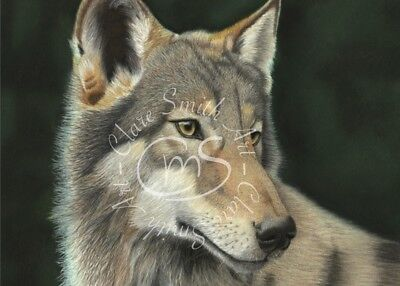 ACEO, ATC, The Lone Wolf, print from an original Clare Smith Wildlife Painting.