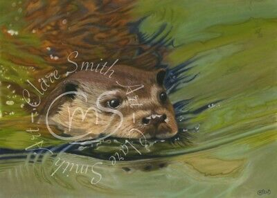 ACEO, ATC, The Quick Dip, print from an original Clare Smith Wildlife Painting.