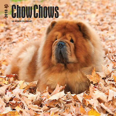 CHOW CHOWS (cani) CALENDARIO 2018 Square NUOVO Browntrout
