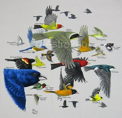 BIRD MIGRATION--Robin Goldfinch Swallow Hummingbird Nature Science T shirt M-XL
