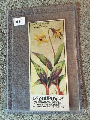 V20 Cowans Chocolate Wild Flowers - Dog Tooth Violet