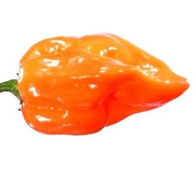 Habanero HOT Pepper Seeds Pack Size to Bulk FREE SHIP Spicy Chili Sauce Easy #68