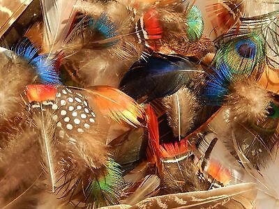 50 mixed bird feathers, peacock, pheasant, mandarin duck. small craft fly tying