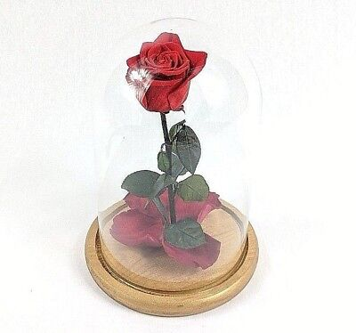 Beauty And The Beast Rose,Enchanted Rose,Rose in Glass Dome, Forever Rose, gift