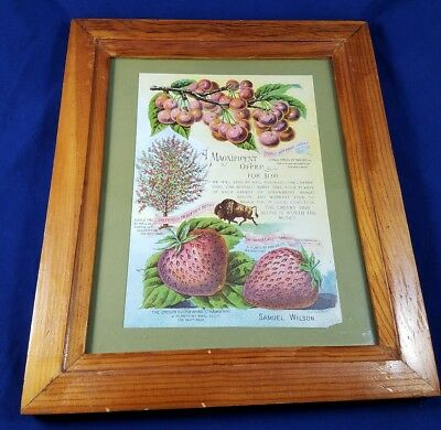 Vintage Advertisement Cherry Seedlings And Strawberry Plants Antique Oak Frame