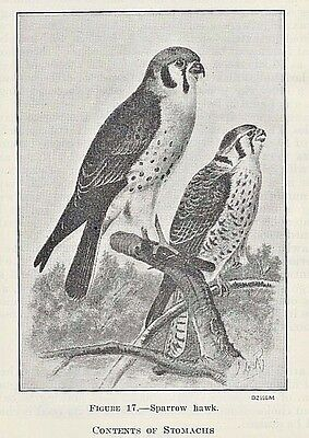 1935 softcover ~ FOOD HABITS OF COMMON HAWKS