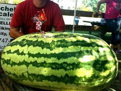 Carolina Cross Watermelon Seeds World's Largest Giant Melon Variety Huge FUN 118