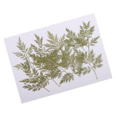 10x Pressed Dried Flower Leaves DIY Necklace Pendant Jewelry Craft Accessory