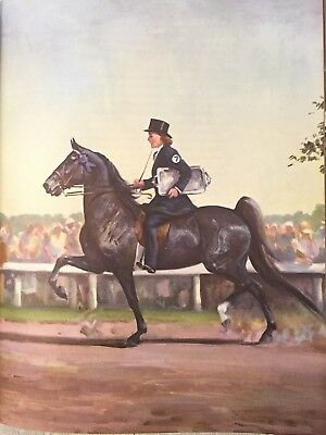Vintage Album of Horses by Marguerite Henry Hardcover 1956 Edition Ilustrated
