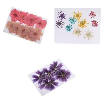 30pcs Real Pressed Flower Dried for Floral Craft Card Making DIY Arts Crafts