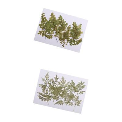 20pcs Pressed Dried Leaves For DIY Phone Case, Bookmark, Resin Jewelry Craft