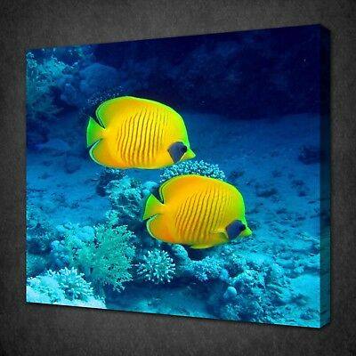 Yellow Butterfly Fish Canvas Picture Print Wall Art Free Fast Delivery