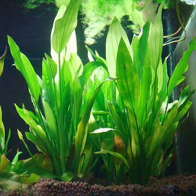 Artificial Plastic Water Grass Green Plant Ornament For Fish Tank Aquarium,.pro#