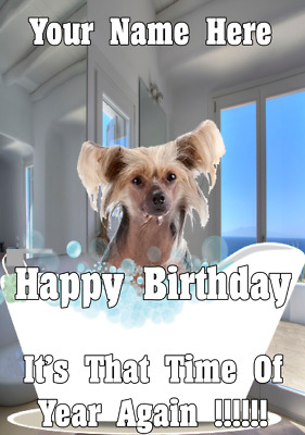 CHINESE CRESTED BD133 Bath Time Fun Cute Birthday Card A5 Personalised  Greetings