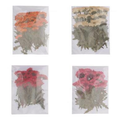 200pcs Pressed Dried Flowers Chrysanthemum for Floral Art Craft Card Making