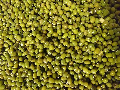 Mung beans  (Moong Bean) Seed for growing, cooking, sprouting, prepping