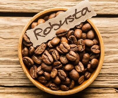 COFFEE ROBUSTA SEEDS - Coffea canephora robusta 10 seeds - FREE DELIVERY FOR UK