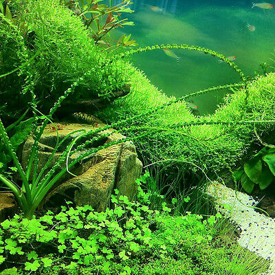 1000pcs Aquarium Tank Mixed Grass Seed  Water Aquatic Plant Seeds Decorations