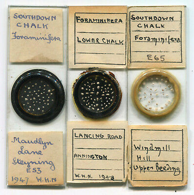 3 Arranged Foraminifera Microscope Slides