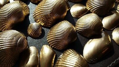 Sea Shells Beach Wedding Decoration Clam Craft SeaShells 80g Gold Chrome Effect