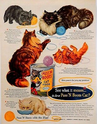 Cat Food Advertisement