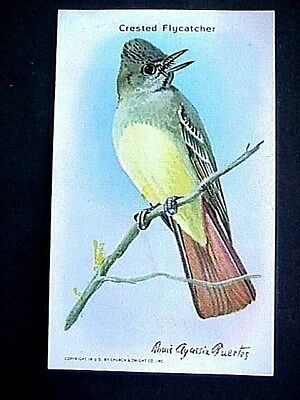 Crested Flycatcher Collectible Trade Card Cow Brand & Arm & Hammer Advertising