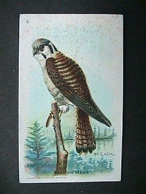 Sparrow Hawk Collectible Trade Card Cow Brand & Arm & Hammer Advertising 1915