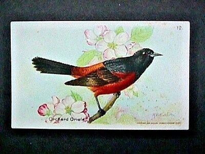 Orchard Oriole Collectible Trade Card Cow Brand & Arm & Hammer Advertising 1922