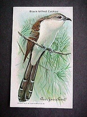 Black Billed Cuckoo Collectible Trade Card Cow Brand & Arm & Hammer Advertising