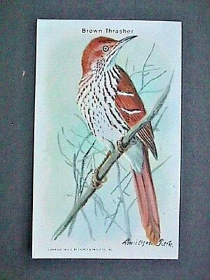 Brown Thrasher Collectible Trade Card Cow Brand & Arm & Hammer Advertising