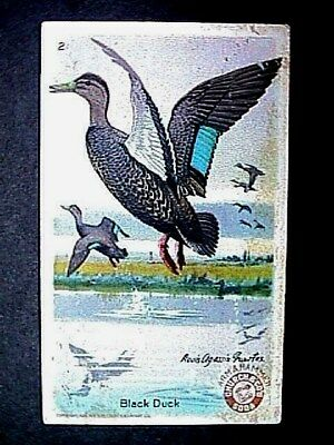 Black Duck Collectible Trade Card Cow Brand & Arm & Hammer Advertising 1924