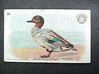 Green Wing Teal Collectible Trade Card Cow Brand & Arm & Hammer Advertising 1904