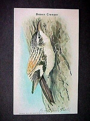 Brown Creeper Collectible Trade Card Cow Brand & Arm & Hammer Advertising