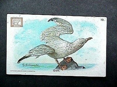 Gull Collectible Trade Card Cow Brand & Arm & Hammer Advertising 1908