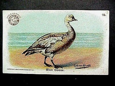 Blue Goose Collectible Trade Card Cow Brand & Arm & Hammer Advertising 1904