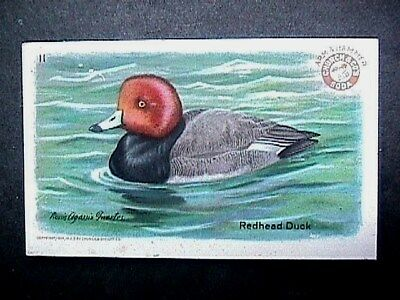 Redhead Duck Collectible Trade Card Cow Brand & Arm & Hammer Advertising 1924