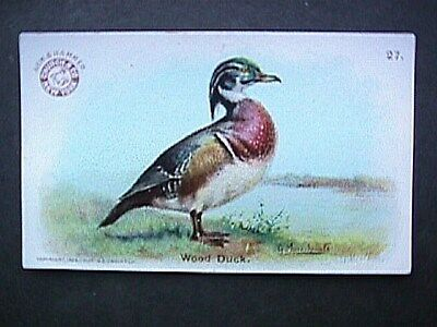 Wood Duck Collectible Trade Card Cow Brand & Arm & Hammer Advertising 1904
