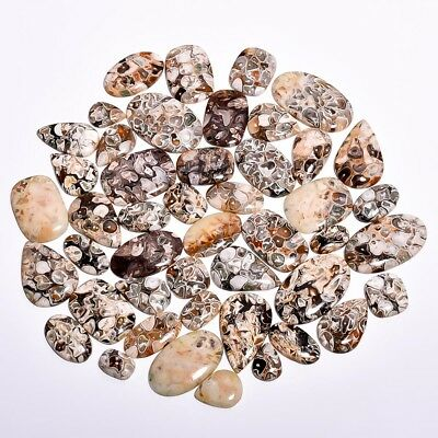 1672Cts 46 Pieces Lot Peanut Fossil Mix Shapes Cabochons Loose Gemstone Z-6317